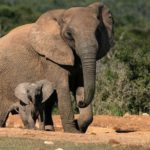 Addo Elephant Park Port Elizabeth up fees